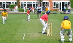 Inter House Cricket May 2015