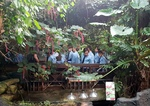 Year 6 Tropical Rain forest field study
